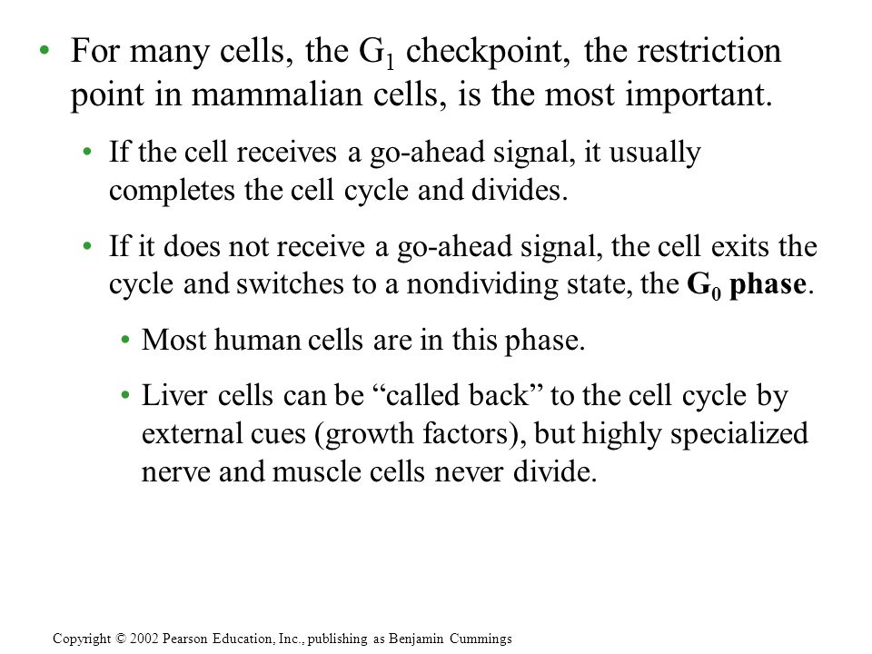 For many cells, the G 1 checkpoint, the restriction point in mammalian cells, is the most important. If the cell receives a go-ahead signal, it usuall