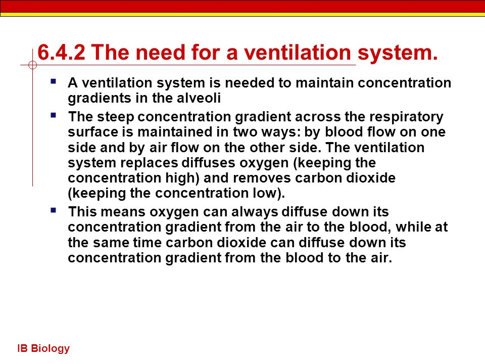 IB Biology 6.4.2 The need for a ventilation system. A ventilation system is needed to maintain concentration gradients in the alveoli The steep concen