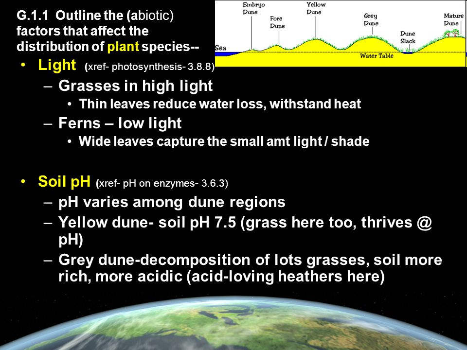 G.1.1 Outline the (abiotic) factors that affect the distribution of plant species-- Light (xref- photosynthesis- 3.8.8) –Grasses in high light Thin leaves reduce water loss, withstand heat –Ferns – low light Wide leaves capture the small amt light / shade Soil pH (xref- pH on enzymes- 3.6.3) –pH varies among dune regions –Yellow dune- soil pH 7.5 (grass here too, thrives @ pH) –Grey dune-decomposition of lots grasses, soil more rich, more acidic (acid-loving heathers here)