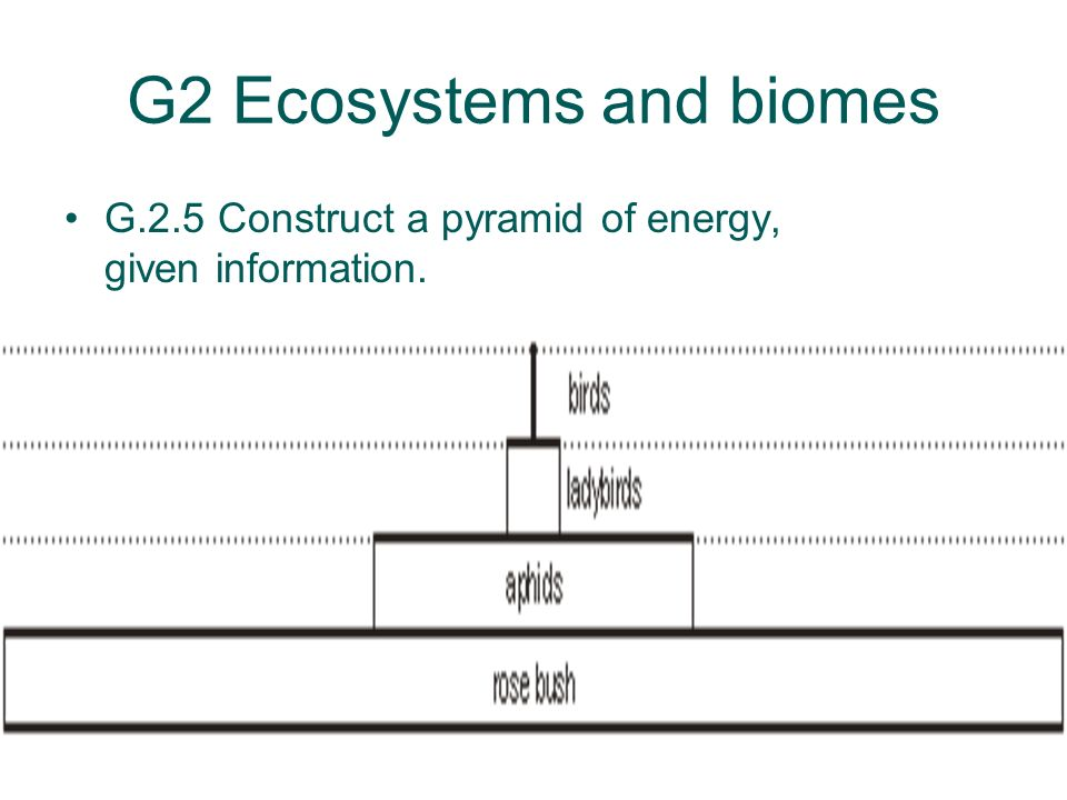 G2 Ecosystems and biomes G.2.5 Construct a pyramid of energy, given information.