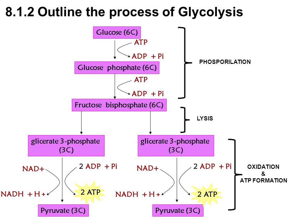Glucose (6C) Glucose phosphate (6C) Fructose bisphosphate (6C) glicerate 3-phosphate (3C) glicerate 3-phosphate (3C) Pyruvate (3C) ATP ADP + Pi ATP AD