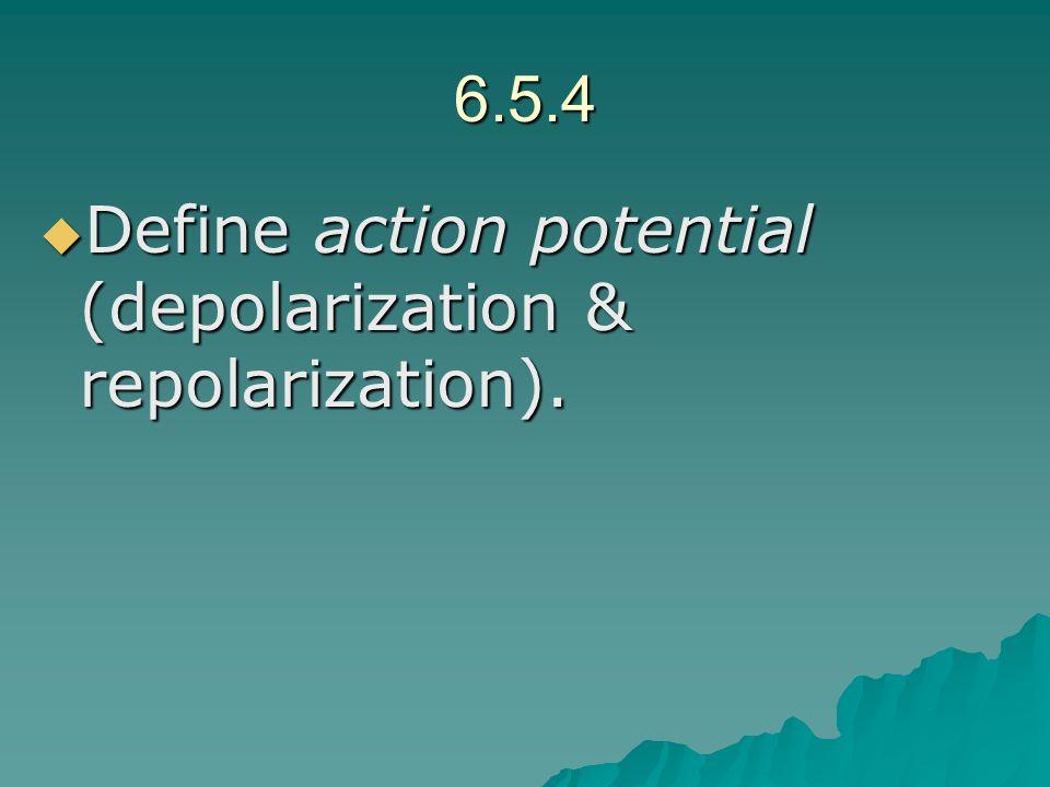 6.5.4 Define action potential (depolarization & repolarization).