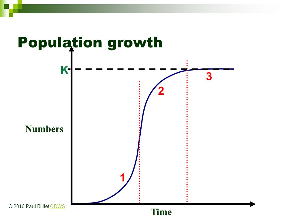 Population growth K Numbers Time 1 2 3 © 2010 Paul Billiet ODWSODWS