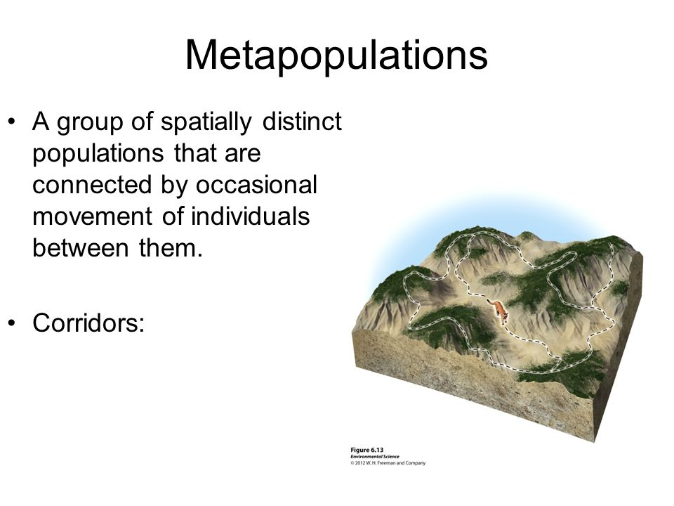 Metapopulations A group of spatially distinct populations that are connected by occasional movement of individuals between them. Corridors: