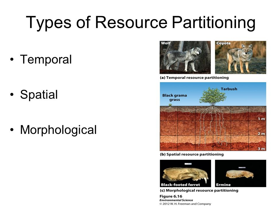 Types of Resource Partitioning Temporal Spatial Morphological