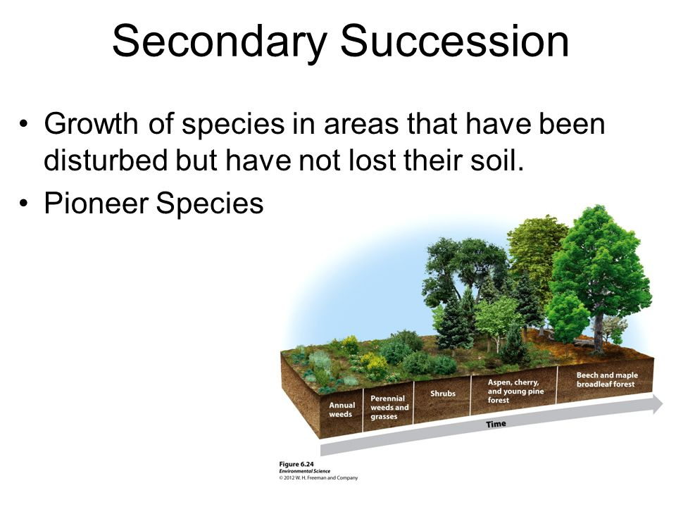 Secondary Succession Growth of species in areas that have been disturbed but have not lost their soil. Pioneer Species