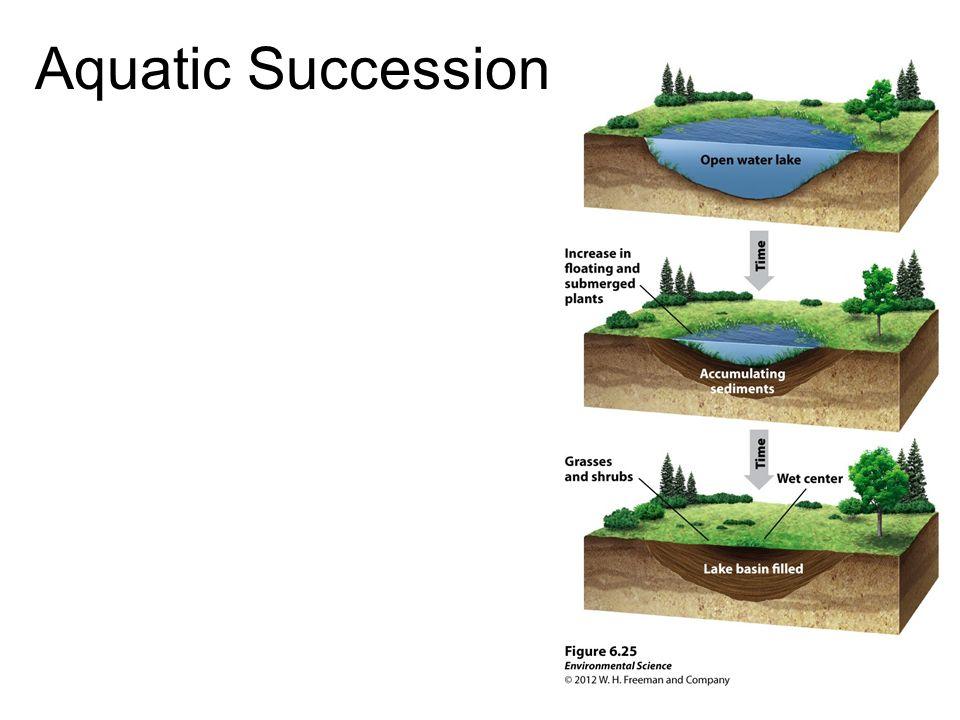 Aquatic Succession