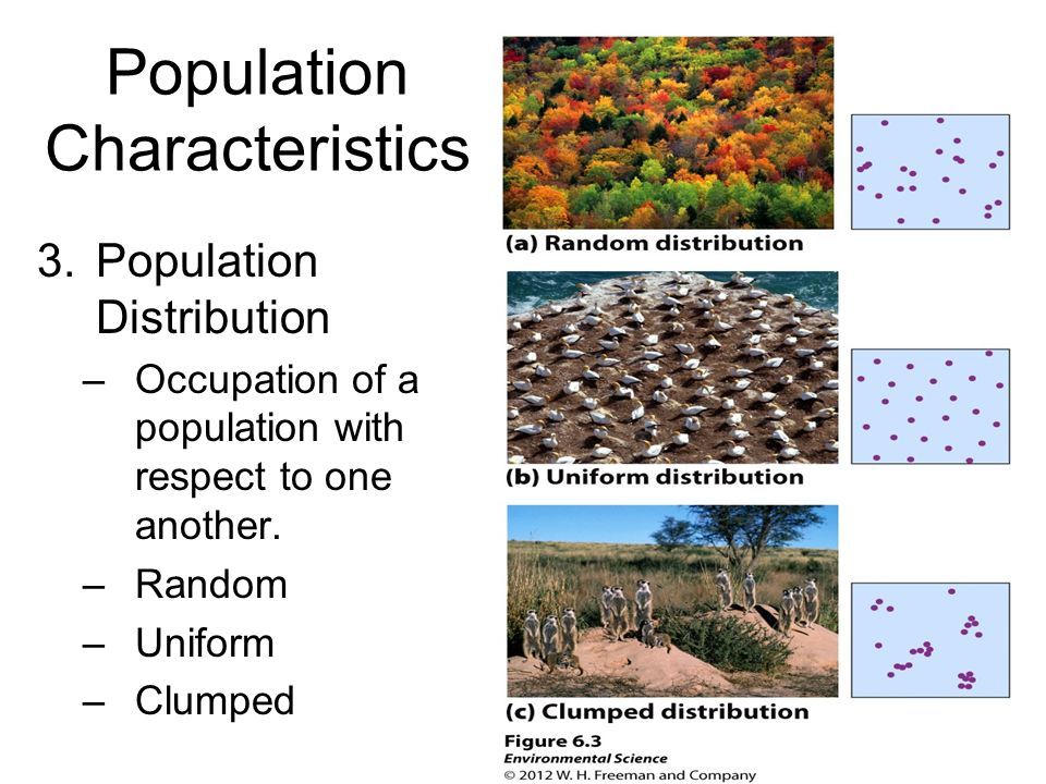 Population Characteristics 3.Population Distribution –Occupation of a population with respect to one another. –Random –Uniform –Clumped