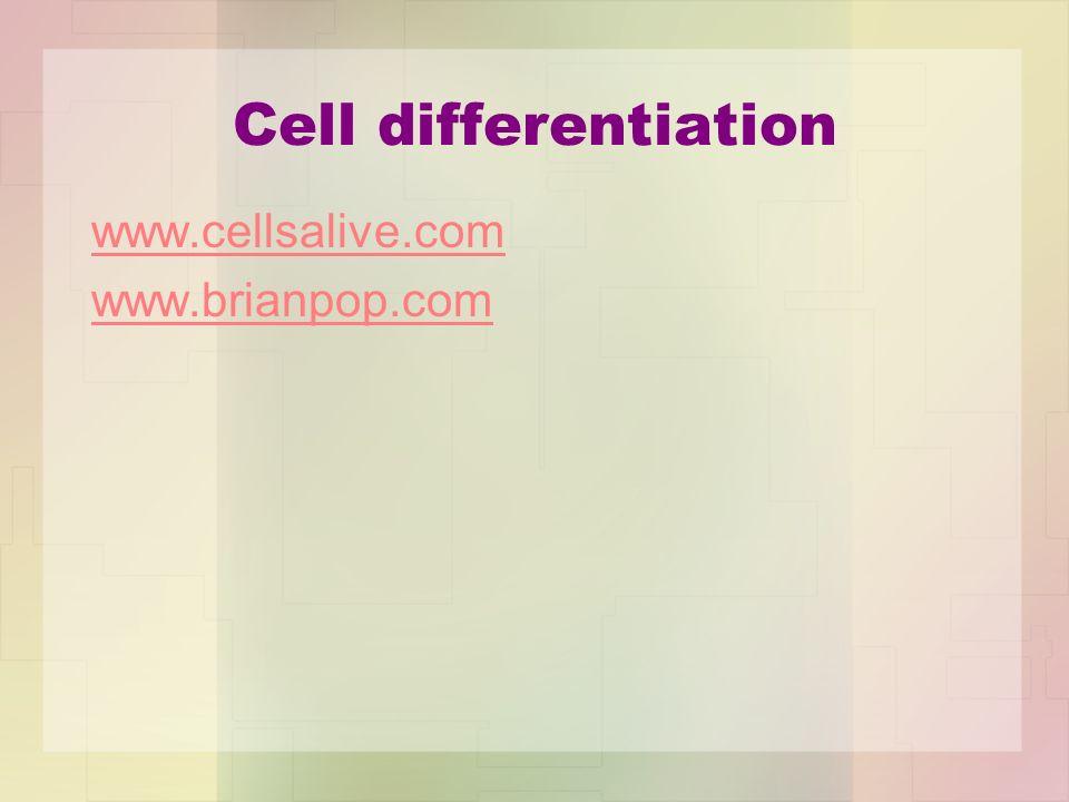 Cell differentiation www.cellsalive.com www.brianpop.com