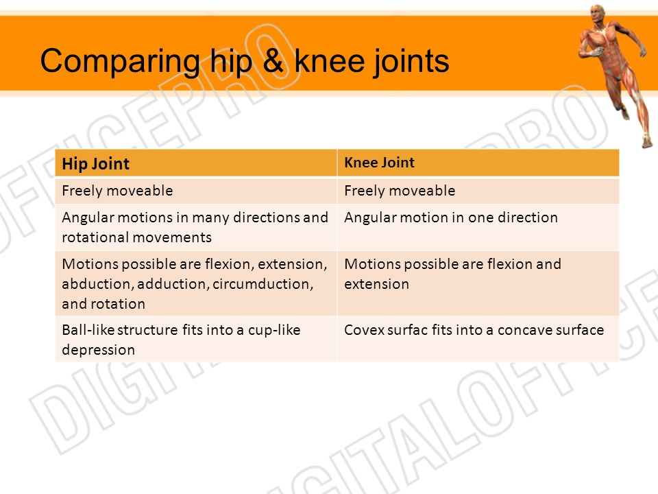 Comparing hip & knee joints Hip Joint Knee Joint Freely moveable Angular motions in many directions and rotational movements Angular motion in one dir