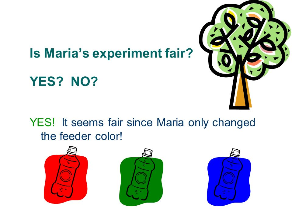 Is Marias experiment fair? YES? NO? YES! It seems fair since Maria only changed the feeder color!