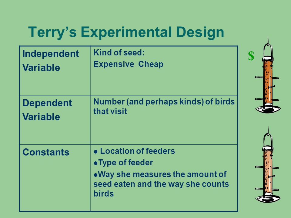 Terrys Experimental Design Independent Variable Kind of seed: Expensive Cheap Dependent Variable Number (and perhaps kinds) of birds that visit Consta