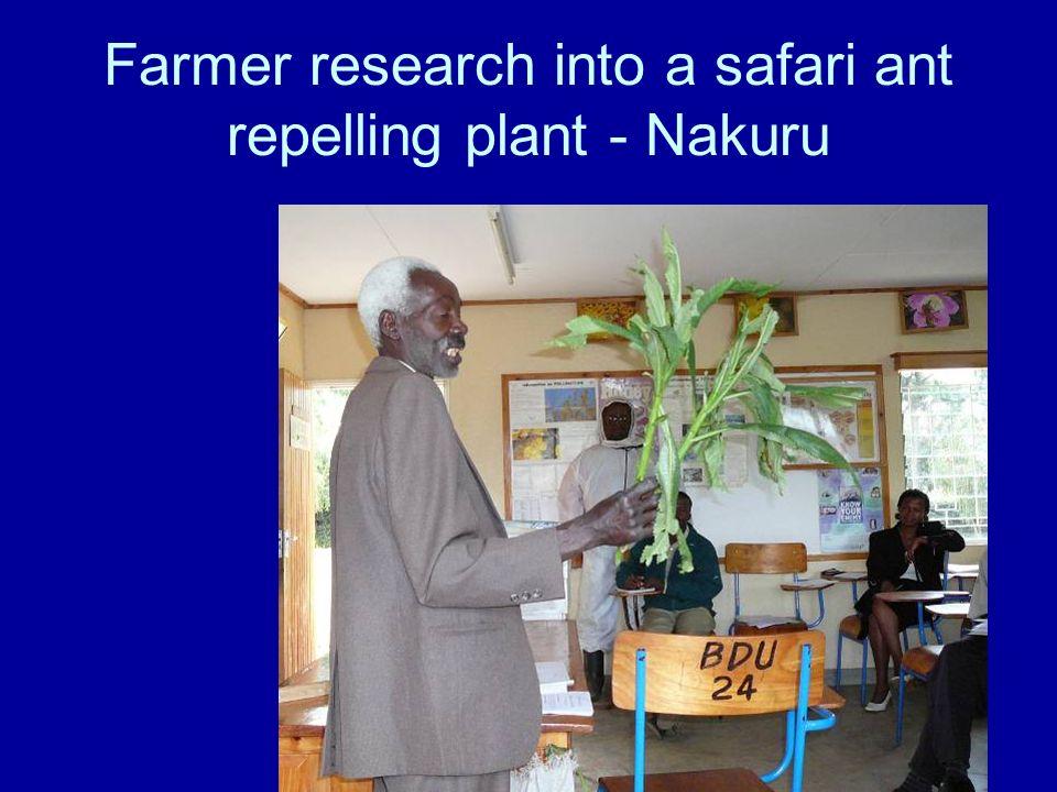 Farmer research into a safari ant repelling plant - Nakuru