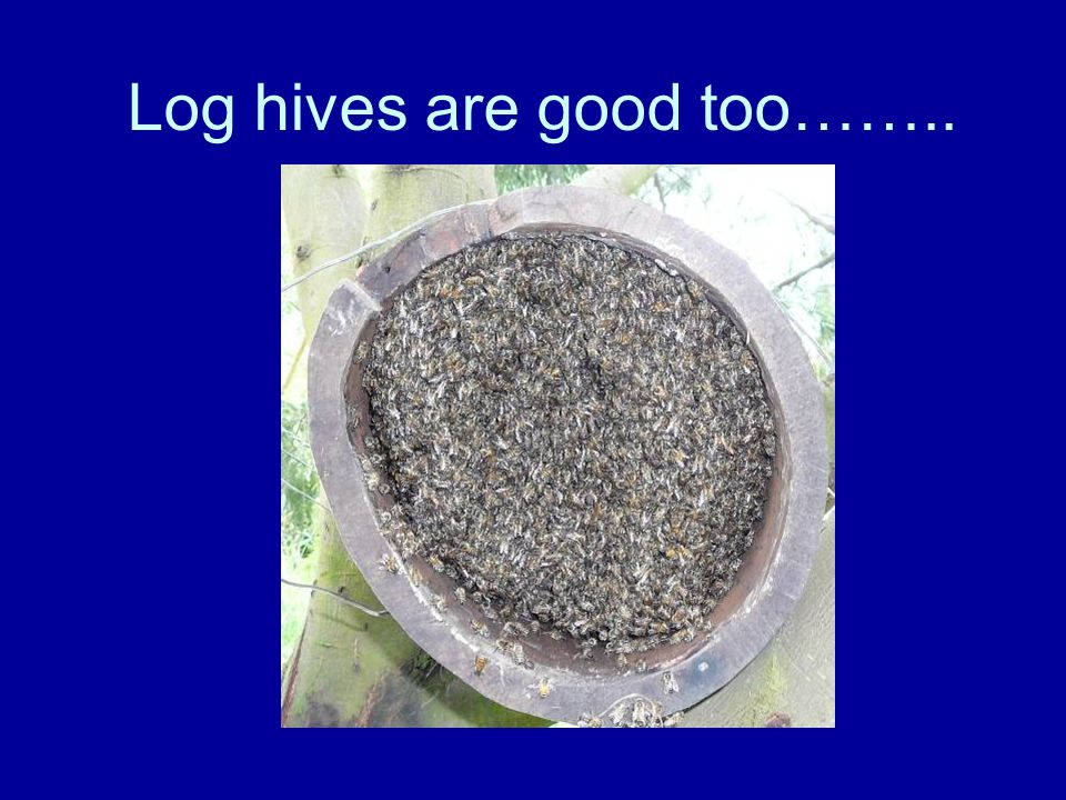 Log hives are good too……..