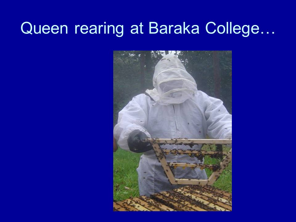 Queen rearing at Baraka College…