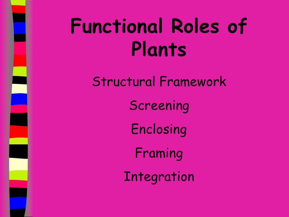 Todays Objectives Describe the functional roles of plants in the landscape.