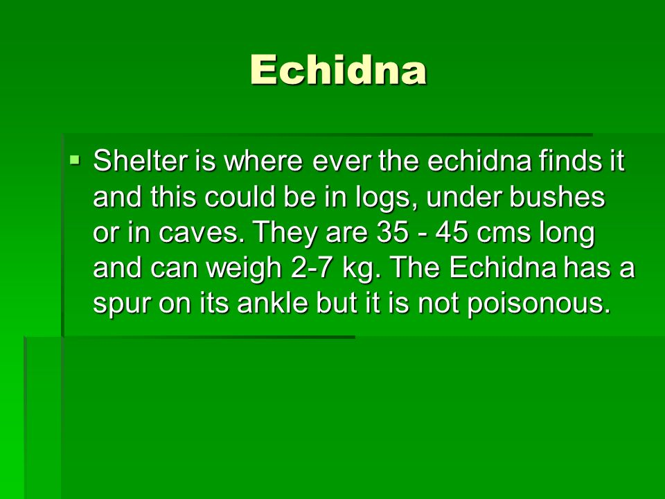 Echidna Shelter is where ever the echidna finds it and this could be in logs, under bushes or in caves. They are 35 - 45 cms long and can weigh 2-7 kg
