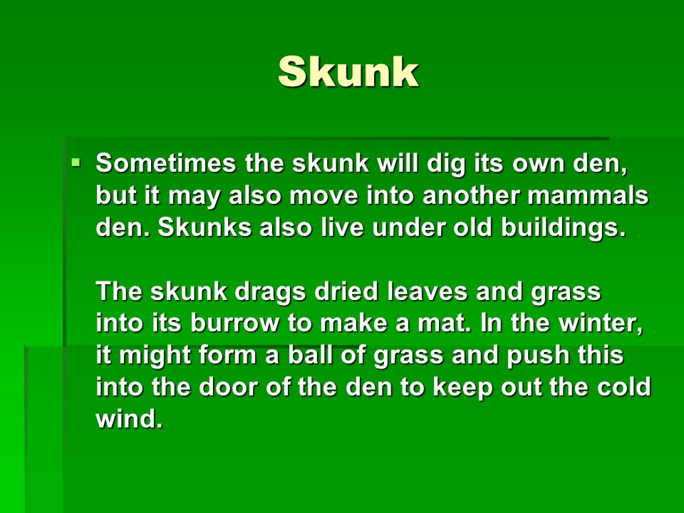 Skunk Sometimes the skunk will dig its own den, but it may also move into another mammals den. Skunks also live under old buildings. The skunk drags d
