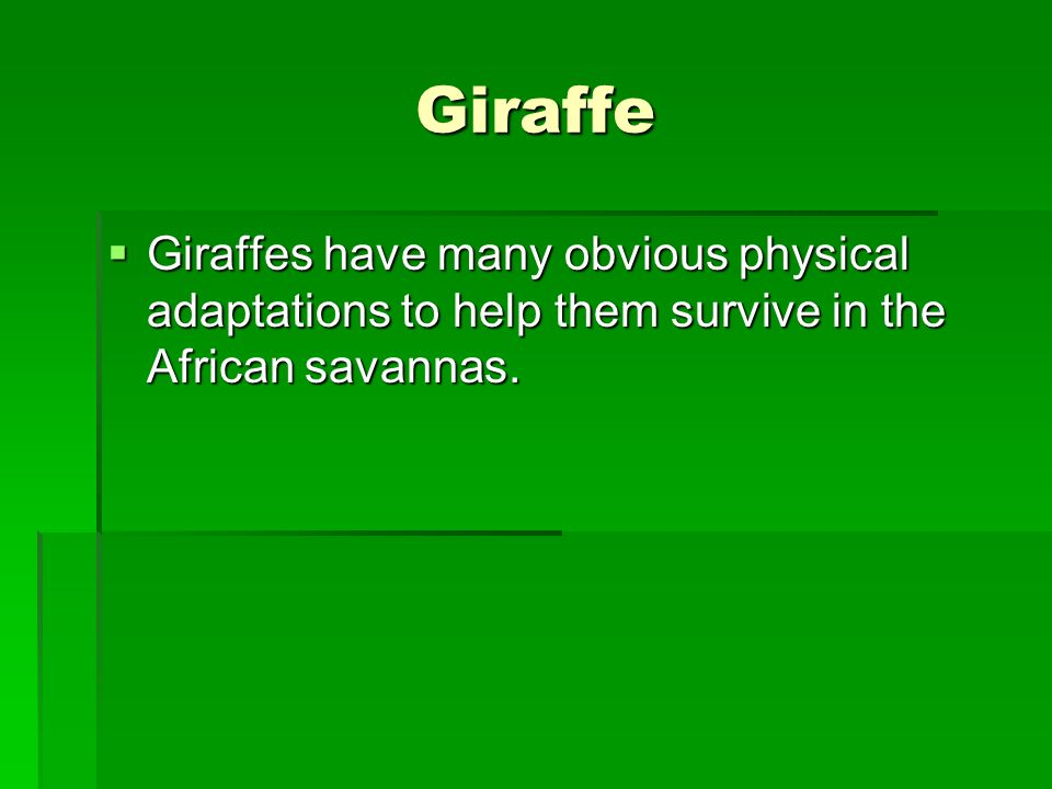 Giraffe Giraffes have many obvious physical adaptations to help them survive in the African savannas. Giraffes have many obvious physical adaptations