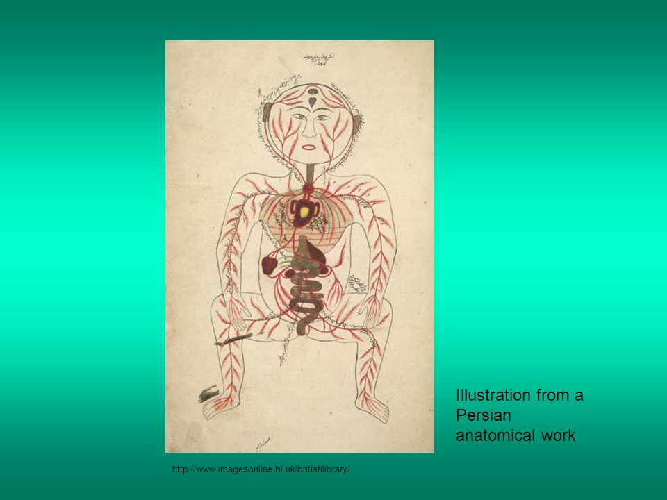 Illustration from a Persian anatomical work http://www.imagesonline.bl.uk/britishlibrary/