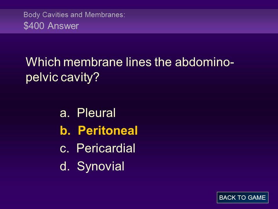 Body Cavities and Membranes: $400 Answer Which membrane lines the abdomino- pelvic cavity? a. Pleural b. Peritoneal c. Pericardial d. Synovial BACK TO