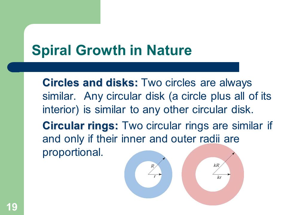 19 Spiral Growth in Nature Circles and disks: Two circles are always similar. Any circular disk (a circle plus all of its interior) is similar to any