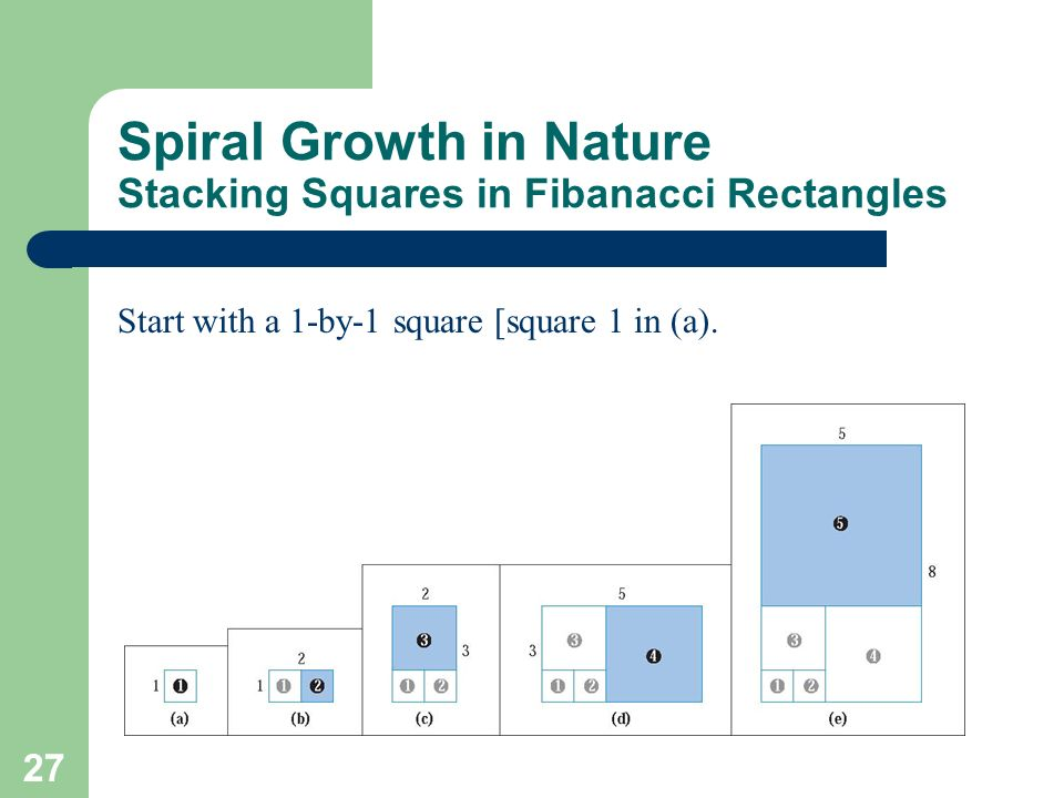 27 Spiral Growth in Nature Stacking Squares in Fibanacci Rectangles Start with a 1-by-1 square [square 1 in (a).