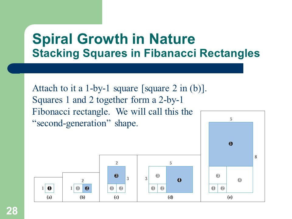 28 Spiral Growth in Nature Stacking Squares in Fibanacci Rectangles Attach to it a 1-by-1 square [square 2 in (b)]. Squares 1 and 2 together form a 2-