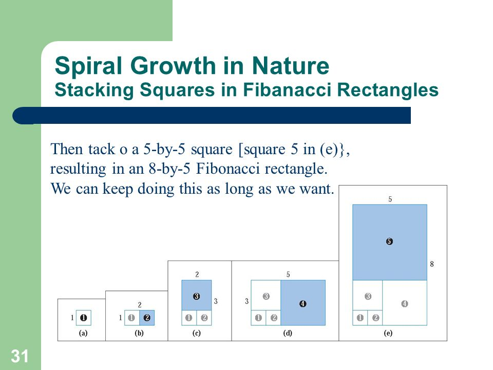 31 Spiral Growth in Nature Stacking Squares in Fibanacci Rectangles Then tack o a 5-by-5 square [square 5 in (e)}, resulting in an 8-by-5 Fibonacci re