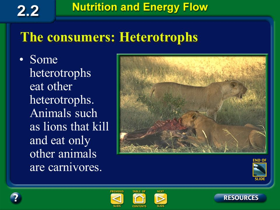 Section 2.2 Summary – pages 46 - 57 The consumers: Heterotrophs A heterotroph that feeds only on plants is an herbivore. Heterotrophs display a variet