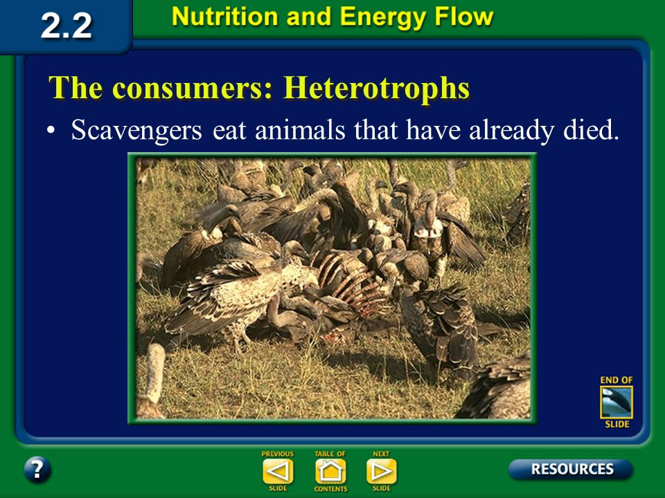 Section 2.2 Summary – pages 46 - 57 The consumers: Heterotrophs Some heterotrophs eat other heterotrophs. Animals such as lions that kill and eat only