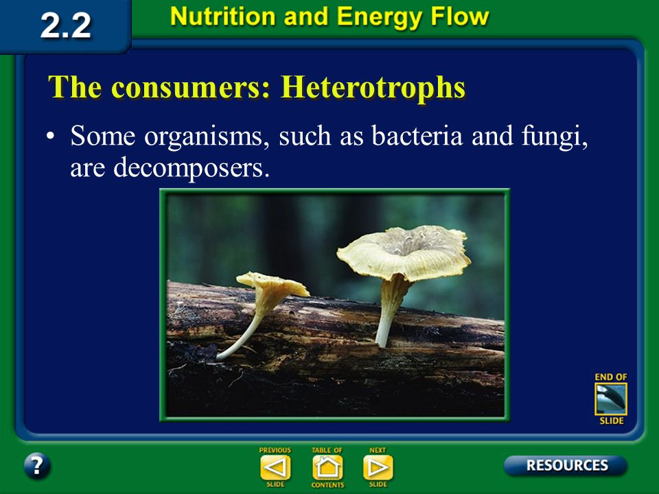 Section 2.2 Summary – pages 46 - 57 The consumers: Heterotrophs Scavengers eat animals that have already died.