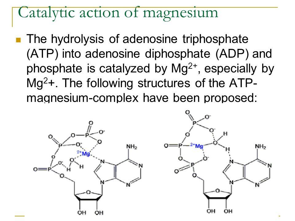 Catalytic action of magnesium The hydrolysis of adenosine triphosphate (ATP) into adenosine diphosphate (ADP) and phosphate is catalyzed by Mg 2+, esp