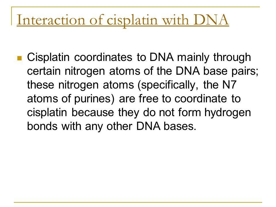 Interaction of cisplatin with DNA Cisplatin coordinates to DNA mainly through certain nitrogen atoms of the DNA base pairs; these nitrogen atoms (spec
