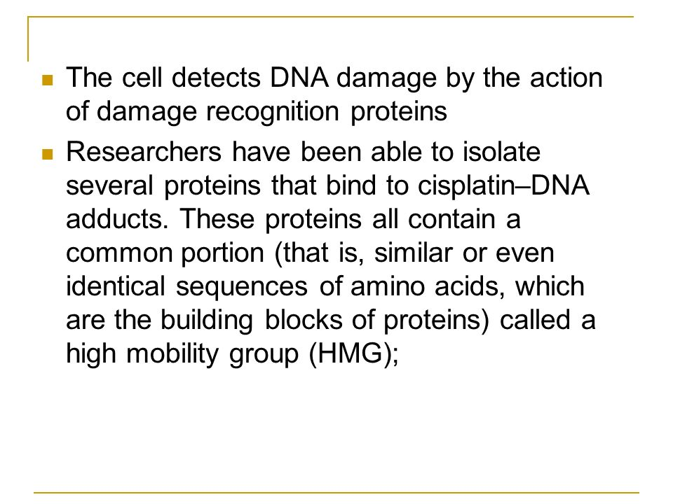 The cell detects DNA damage by the action of damage recognition proteins Researchers have been able to isolate several proteins that bind to cisplatin