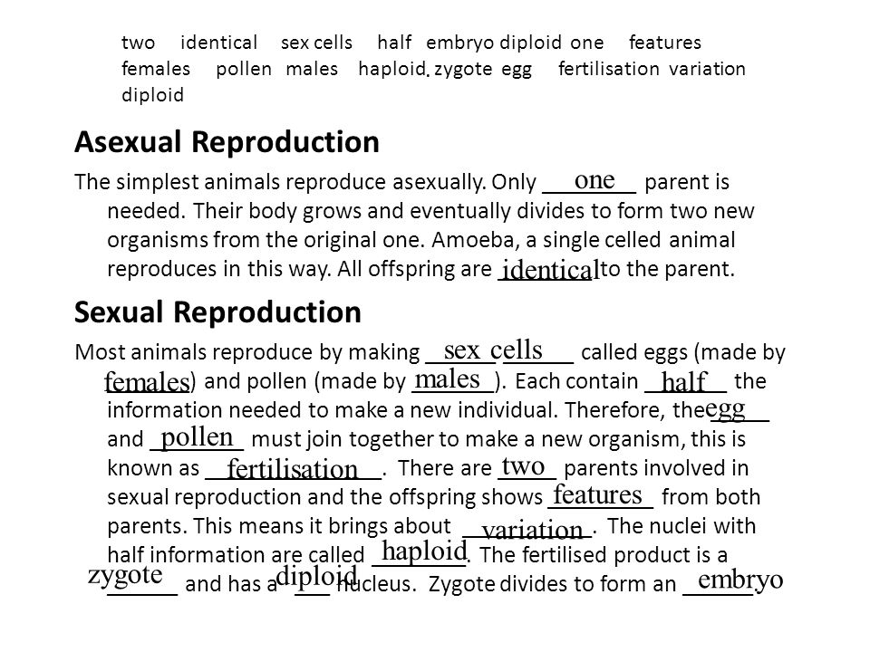 . Asexual Reproduction The simplest animals reproduce asexually. Only ________ parent is needed. Their body grows and eventually divides to form two n