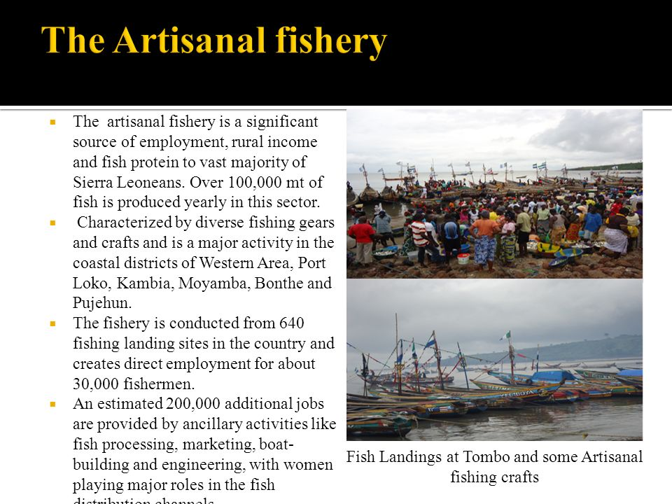 The artisanal fishery is a significant source of employment, rural income and fish protein to vast majority of Sierra Leoneans.