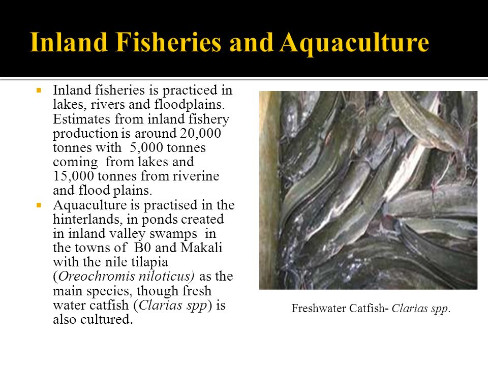 Inland fisheries is practiced in lakes, rivers and floodplains.