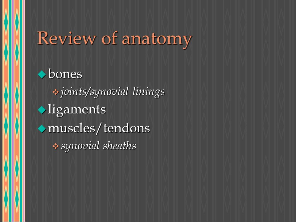 Review of anatomy u bones v joints/synovial linings u ligaments u muscles/tendons v synovial sheaths