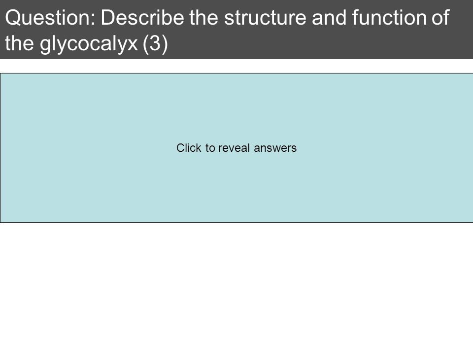 Question: Describe the structure and function of the glycocalyx (3) Consists of glycoproteins Which are proteins with added carbohydrate chains Used f