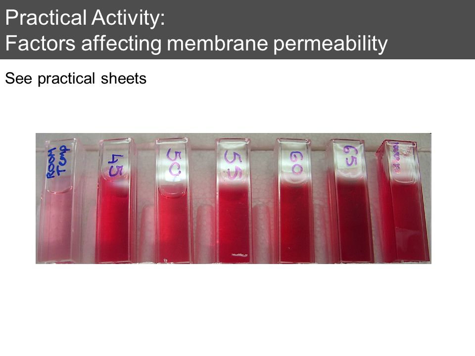 Practical Activity: Factors affecting membrane permeability See practical sheets