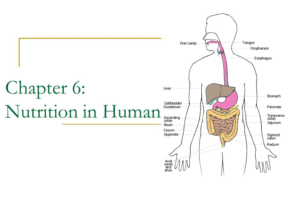 Chapter 6: Nutrition in Humans