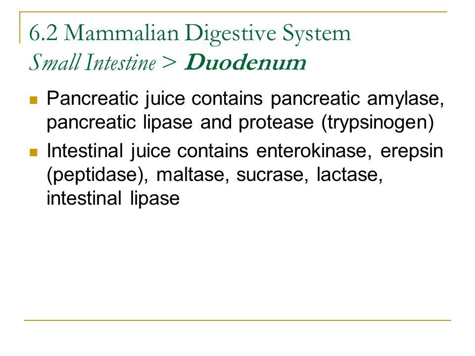6.2 Mammalian Digestive System Small Intestine > Duodenum Pancreatic juice contains pancreatic amylase, pancreatic lipase and protease (trypsinogen) I