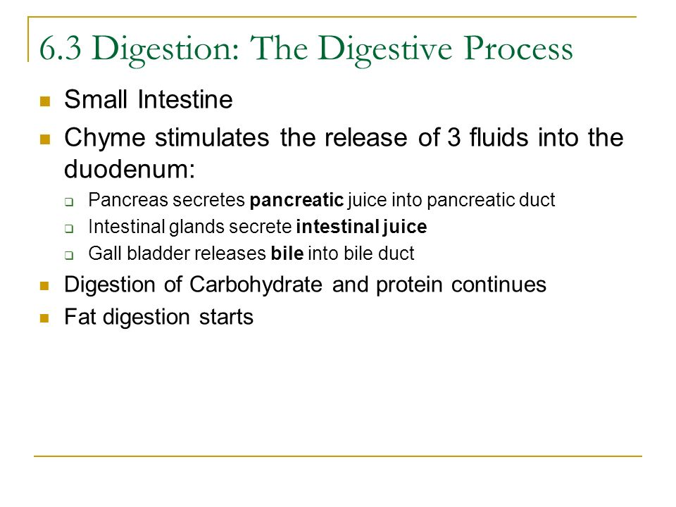 Small Intestine Chyme stimulates the release of 3 fluids into the duodenum: Pancreas secretes pancreatic juice into pancreatic duct Intestinal glands