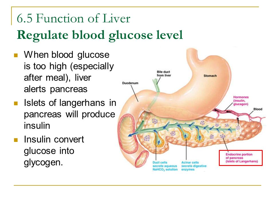 6.5 Function of Liver Regulate blood glucose level When blood glucose is too high (especially after meal), liver alerts pancreas Islets of langerhans