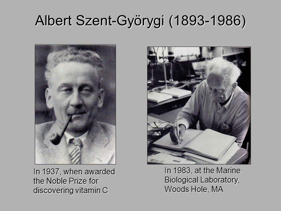 Albert Szent-Györygi (1893-1986) In 1937, when awarded the Noble Prize for discovering vitamin C In 1983, at the Marine Biological Laboratory, Woods H