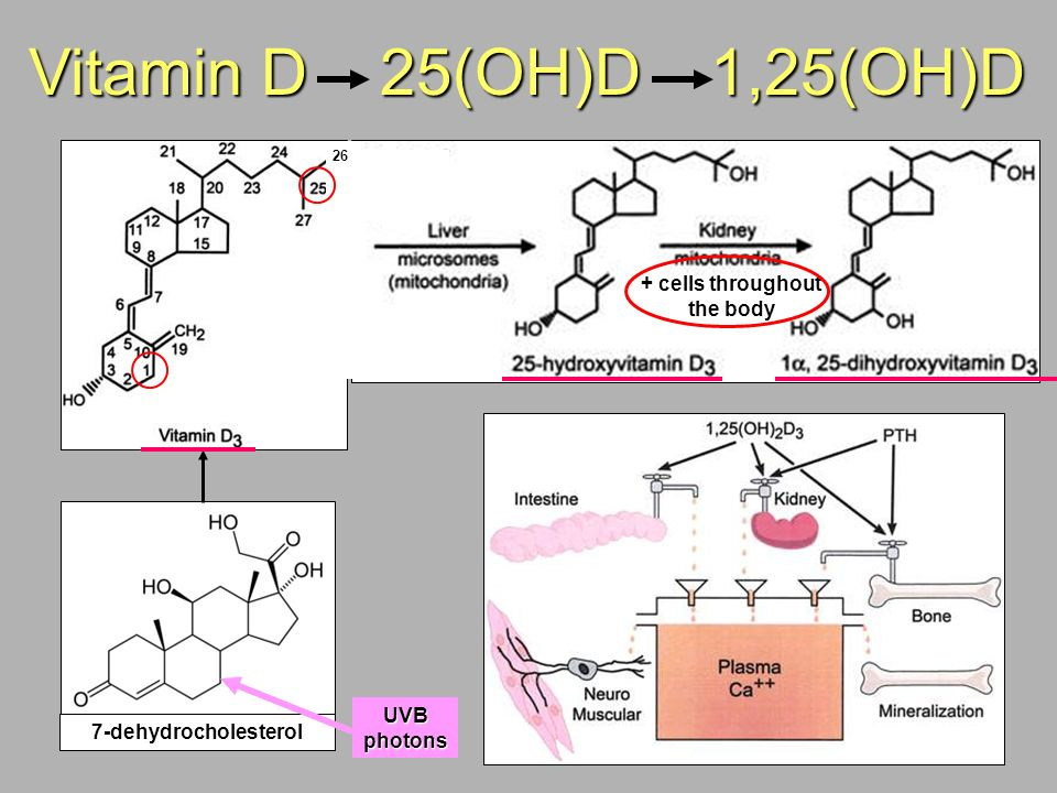 Vitamin D 25(OH)D 1,25(OH)D 26 + cells throughout the body 7-dehydrocholesterol UVB photons