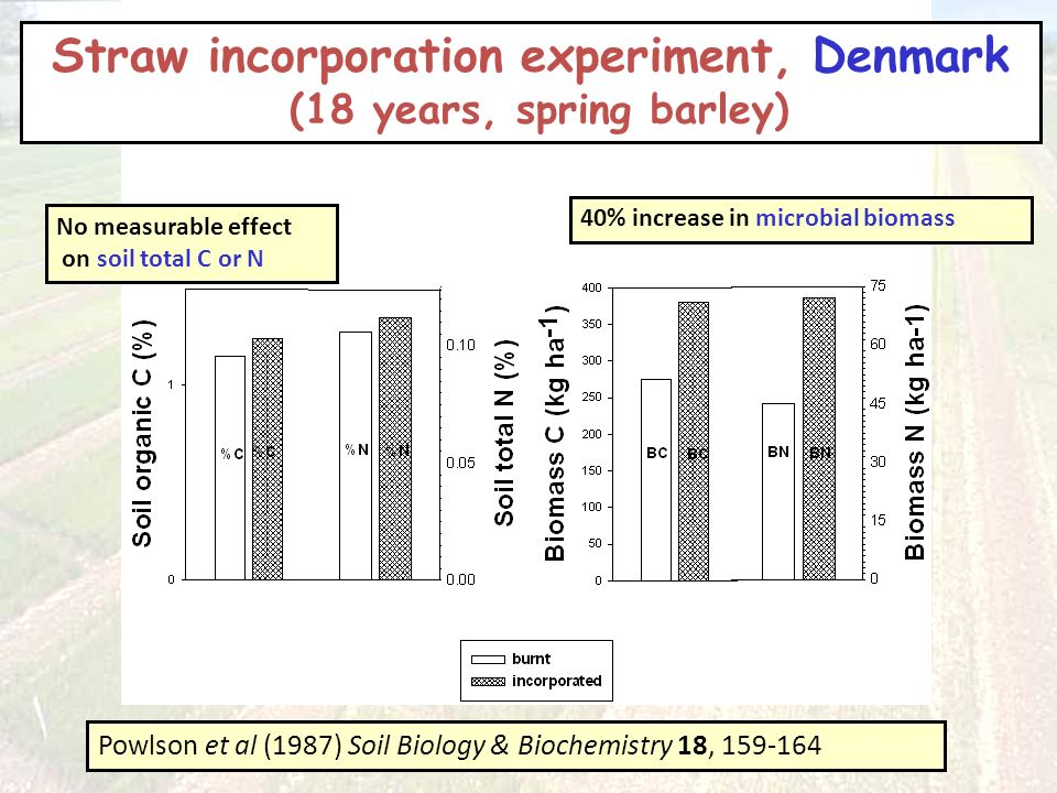Straw incorporation experiment, Denmark (18 years, spring barley) Powlson et al (1987) Soil Biology & Biochemistry 18, 159-164 No measurable effect on soil total C or N 40% increase in microbial biomass