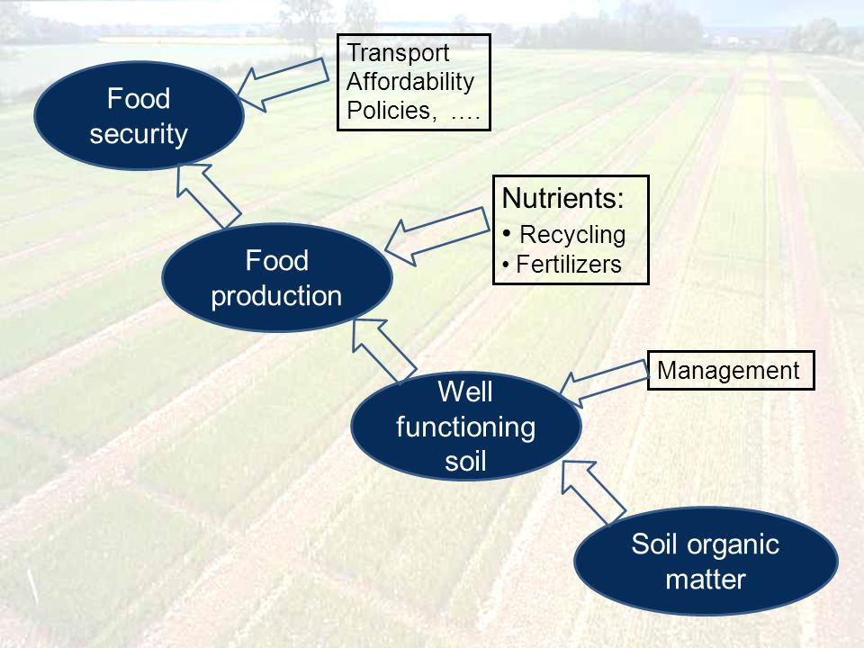 Food security Food production Well functioning soil Soil organic matter Transport Affordability Policies, ….