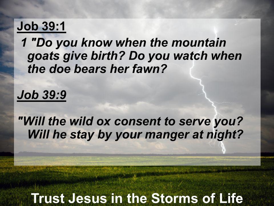 Trust Jesus in the Storms of Life Job 39:1 1